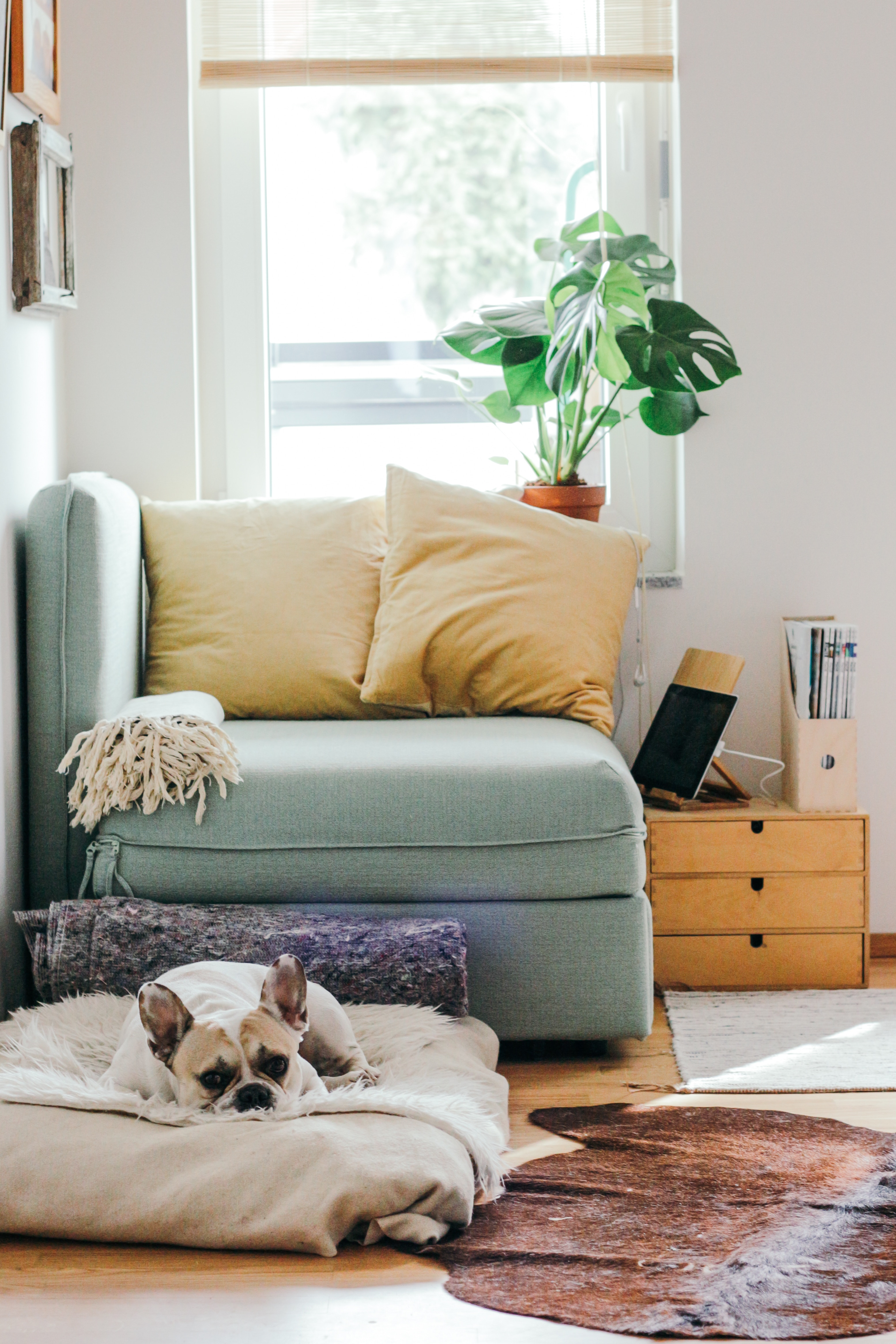 7 Apartment Decorating Ideas To Make Your Rental Feel More Like Home /// By